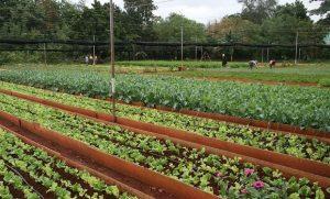 veg-farming