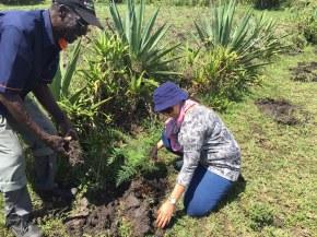 ketito tree planting2